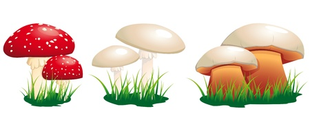toadstool: poisonous mushrooms