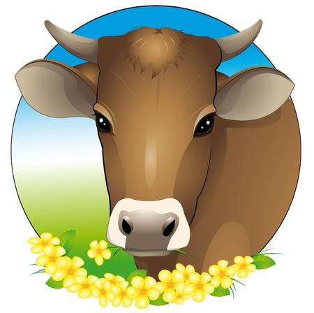 vee: koe-portret Stock Illustratie