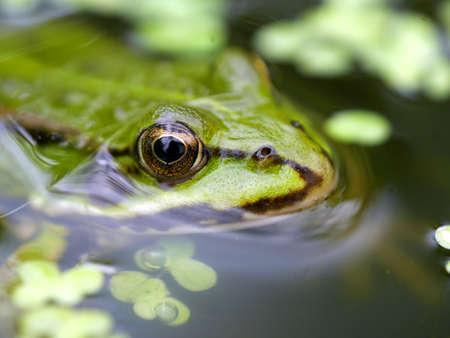 close up frog Stok Fotoğraf