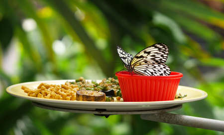meal for the butterfly background.