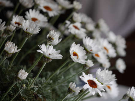 close up shot of marguerites