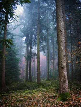 autumn forest Reklamní fotografie