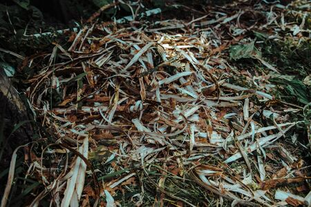 Sawdust shavings and shredded branches folded together to form a pattern for the background