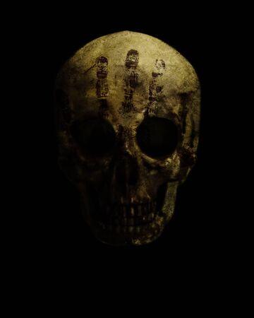 real skull is isolated on black background Standard-Bild