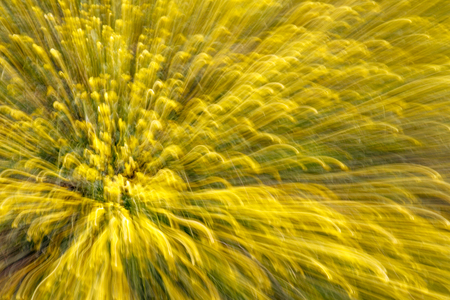 Abstract background of nature. Shooting at slow shutter speed when changing the lens focal length. Stock Photo
