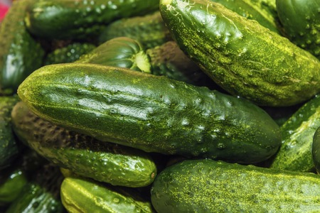 Fresh cucumbers or gherkin. Background from organic vegetables from garden. Healthy food concept. Banco de Imagens - 106848717