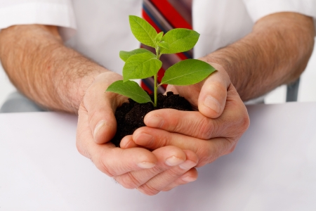 Close-up of a businessmans hands cup a green plant.
