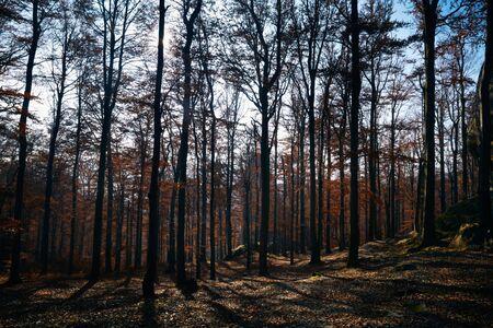 autmn: Picture of autmn wood with trees, shadows and sky. Ukraine