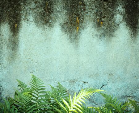 damp: The damp is attacking the wall Stock Photo