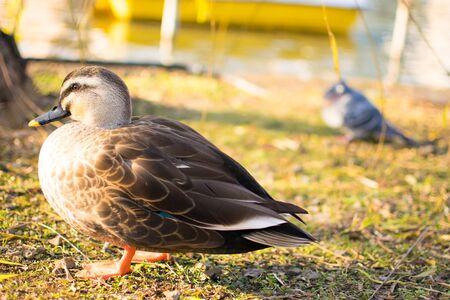 restful: Bird Stock Photo