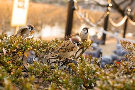 restful: Sparrow