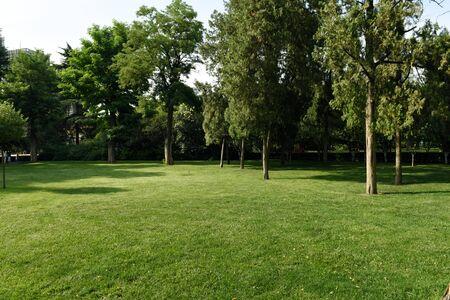 gramineas: Parque con hierbas verdes Foto de archivo