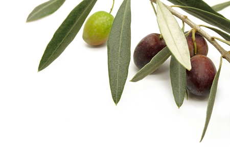 Olive Branch with Black and Green Olives on White Background