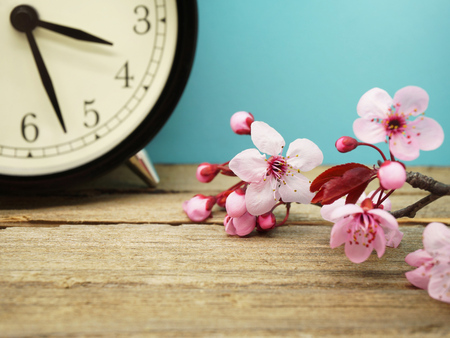 daylight: Spring Time Change - Pink Blossoms and an Alarm Clock on an Old Wooden Table Stock Photo