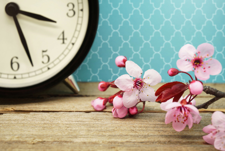 time sensitive: Spring Time Change - Pink Blossoms and an Alarm Clock on an Old Wooden Table Stock Photo