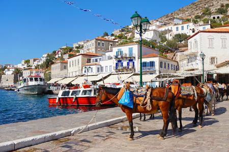 Mules en attente de touristes au port de l'île d'Hydra en Grèce