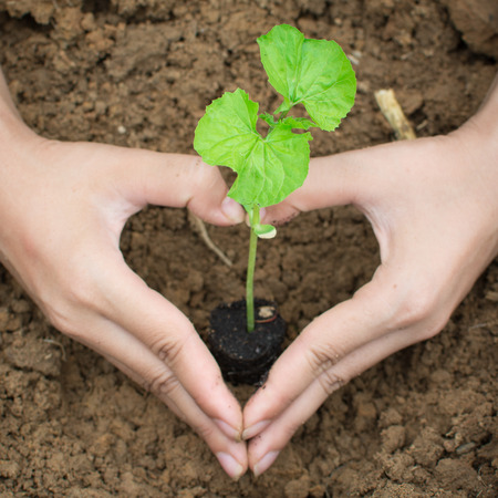 planting a tree: planting a tree New life. Stock Photo