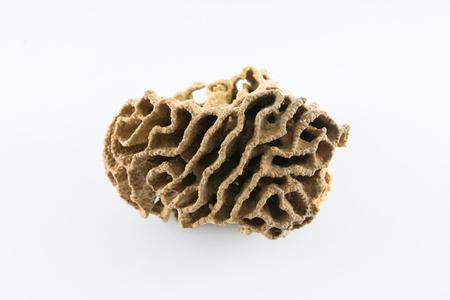 termite: termite nests white background