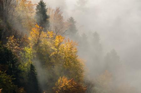 malone: Autumn mists in Pieniny, Poland