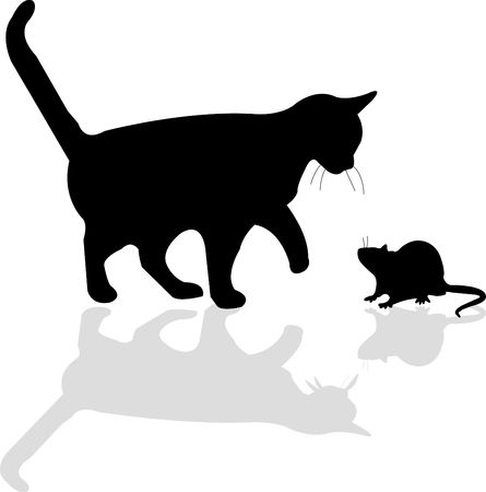 Cat and mouse photo