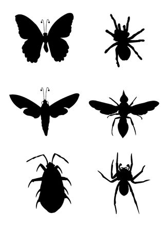 etymology: insect