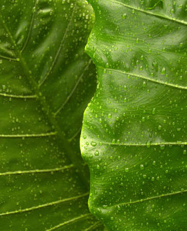 abstraction of plant    abstract plant    Closeup green plant photo