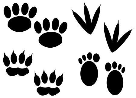 huellas de perro: una foto del animal pie Foto de archivo