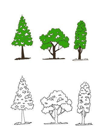 cypress:  Vector trees with leaves