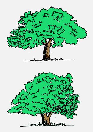 Vector trees with leaves Vektorové ilustrace