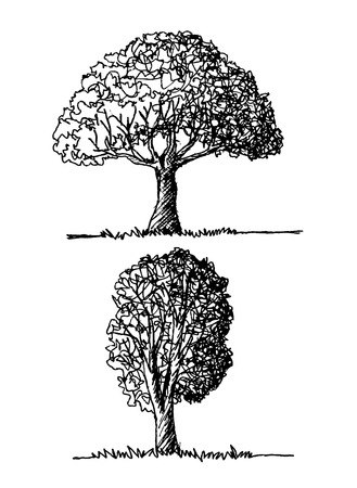 pear tree: Vector trees with leaves