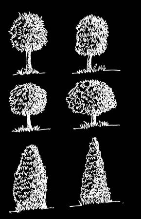 zypresse: Vector B�ume mit Bl�ttern Illustration