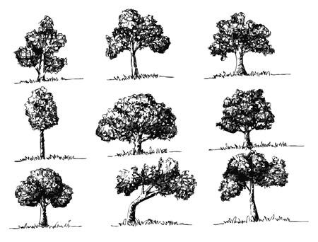 haya: Los �rboles del vector con las hojas Vectores