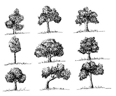 arbol alamo: Los �rboles del vector con las hojas Vectores