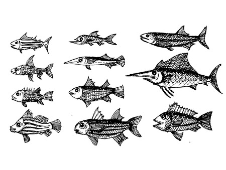anchovy: hand drawn fish Vector illustration