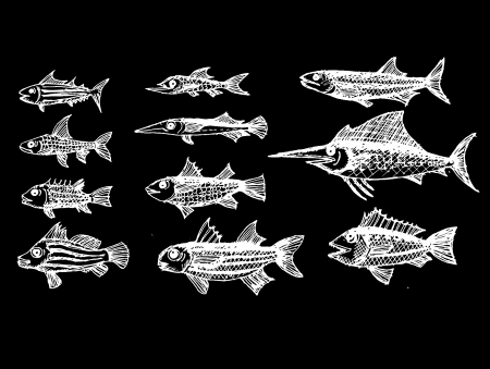 white salmon river: hand drawn fish Vector illustration