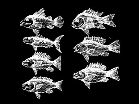 crucian: hand drawn fish Vector illustration