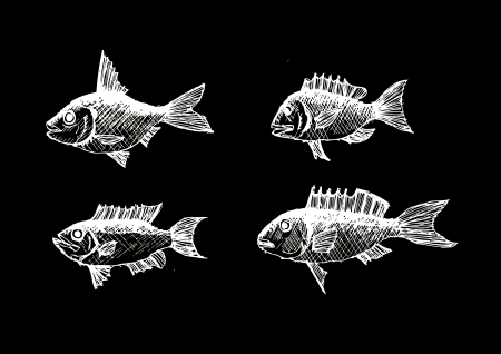 Hand drawn fish Vector illustration  Illustration