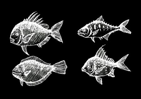 photorealistic: hand drawn fish Vector illustration  Illustration