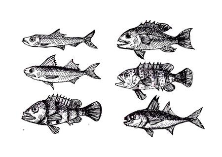 hand drawn fish Vector illustration  Vector