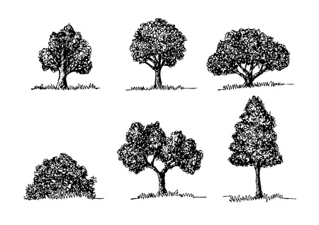 walnut: Set of Vector trees with leaves  Illustration