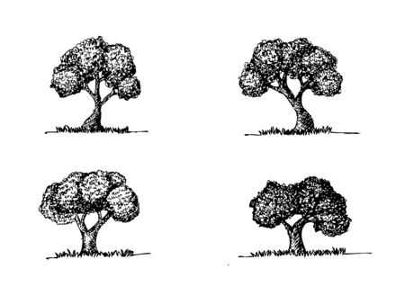 knotty: Set of trees with leaves  Illustration