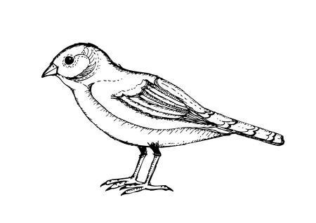 passerine: Bird collection illustration Illustration