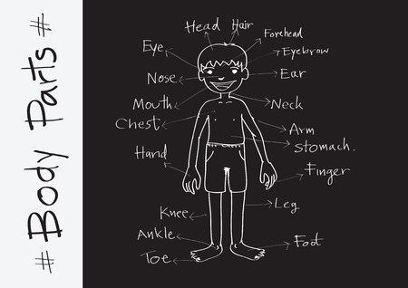 vocabulary: part of body vocabulary in illustration