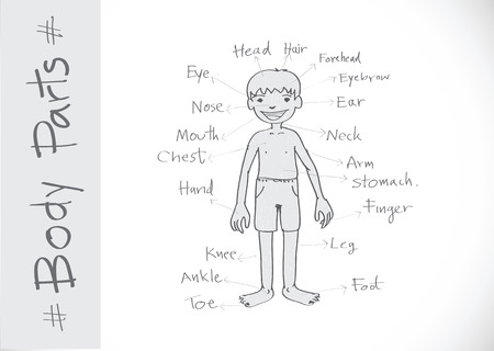 part of body vocabulary in illustration  Vector