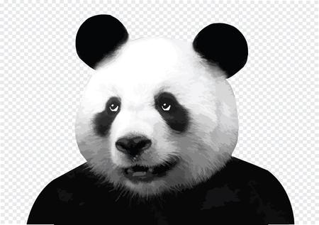 Vector image of panda Vector