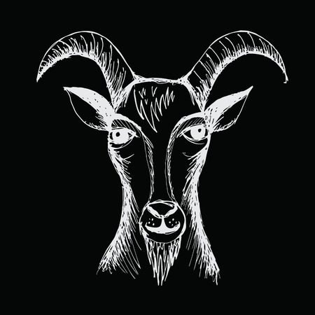 bighorn: Hand drawn Goat Illustration