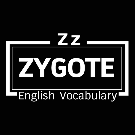 vocabulary: ZYGOTE english word vocabulary illustration design