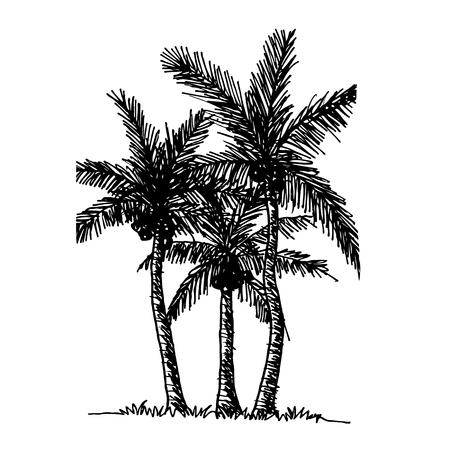 doodle coconut tree icon hand draw illustration design Illustration