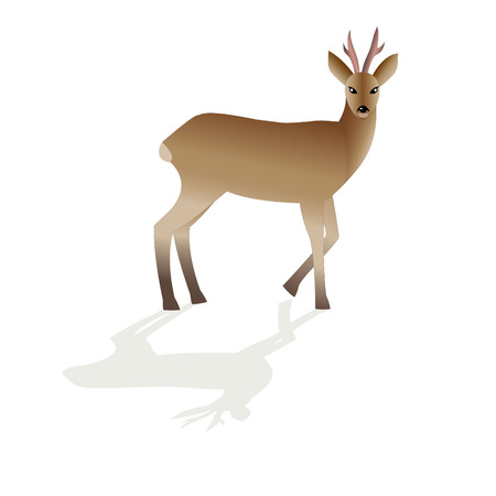 roe deer image isolated on white background, Vector