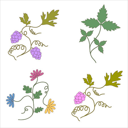 Grapevine wine design elements Vector